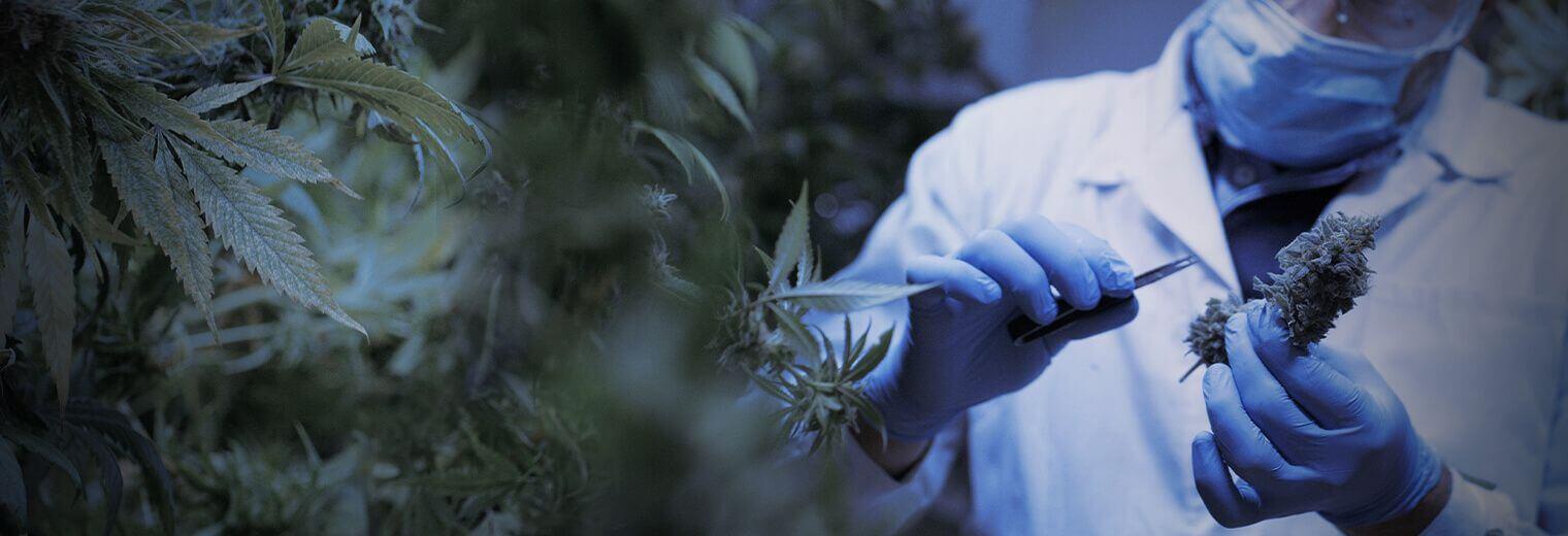 Cannabis industry insurance